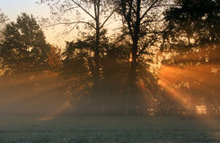 Sun rays. Crossing a misty trees photographed in an early autumn morning Royalty Free Stock Photos