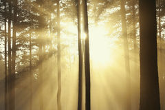 Sun rays Royalty Free Stock Photos