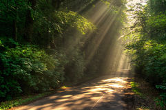 Sun rays. On a street trough a forest Stock Images