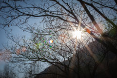 Sun rays across branches. In autumnal time, Vittotio Veneto, Italy Royalty Free Stock Photography