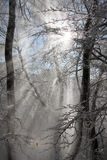 Sun rays against winter forest Stock Images