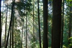 Sun rays attraversando una parte anteriore nebbiosa Fotografia Stock