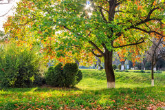 Sun rays in autumn tree foliage Royalty Free Stock Photos