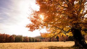 Autumn Trees and Leaves in sun rays. Sun rays through autumn trees and leaves stock video