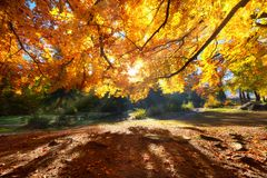 Sun rays through autumn trees. Natural autumn landscape in the forest. Autumn forest and sun as a background. Autumn - image stock image