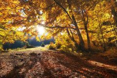 Sun rays through autumn trees. Natural autumn landscape in the forest. Autumn forest and sun as a background. Nature at the autumn time royalty free stock images