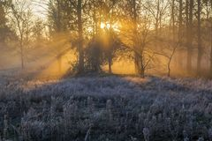 Sun rays.Autumn Royalty Free Stock Images