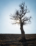 Sun rays and bare lonely tree Royalty Free Stock Photography