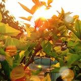 Sun rays royalty free stock photos