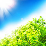 Sun Rays and Beech Branches Royalty Free Stock Images