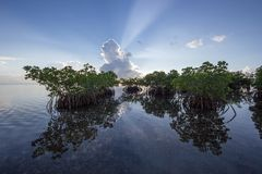 Sun rays behind Mangroves in Biscayne National Park, Florida. stock images