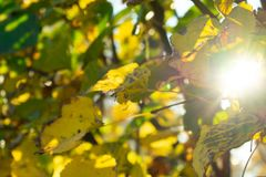 Sun rays breaking through the leaves, morning royalty free stock photos