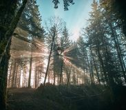 Sun rays burst through the forest Stock Images