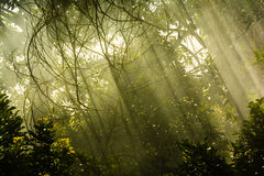 Sun rays. Cloudy color sun rays in forest Stock Photography