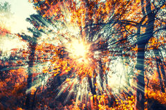 Sun rays in color. Sun rays in  forest ,colorful rays Stock Photo