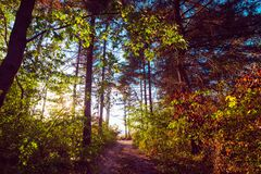 Sun rays in the colorful woods in autumn stock photo