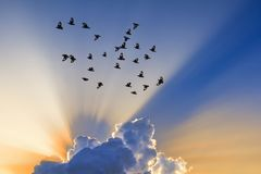Sun rays come through clouds.  Royalty Free Stock Photos