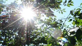 Sun rays come through green cherry tree foliage. Beautiful, twinkling sunshine with sun rays coming through fresh, vibrant, lush, cherry tree foliage in garden stock video footage