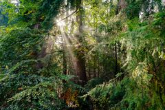 Sunburst crepuscular rays god beams, light through trees sunbeam Stock Photos