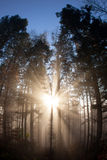 Sun rays crossing a misty forest Stock Photography