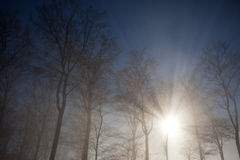 Sun rays crossing misty forest Stock Photography