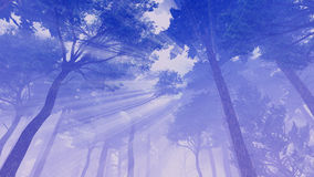 Sun rays in the crowns of pines Royalty Free Stock Photography