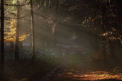 Sun rays into dark forest landscape Royalty Free Stock Photography