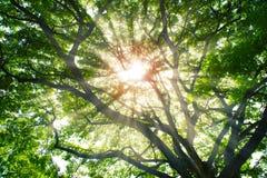 Sun rays das Glänzen durch Bäume Lizenzfreie Stockbilder