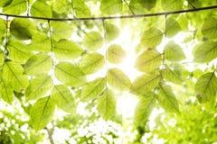 Sun rays das Glänzen durch Bäume Lizenzfreie Stockfotografie