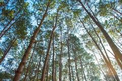 Sun rays das Glänzen durch Bäume Stockbild