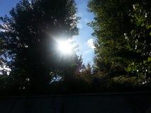 Sun rays das Glänzen durch Bäume Stockfoto