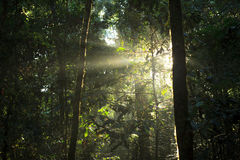 Sun rays deep in the rain forest Stock Images