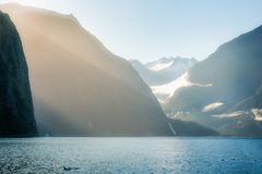 Sun rays and dolphins at Milford Sound. Sun rays on a foggy morning at Milford Sound looking towards Bowen Falls in Fiordland National Park. A few dolphins are Stock Photo