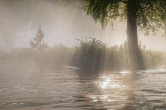 Sun rays in a fog over a river in a wild forest Royalty Free Stock Images