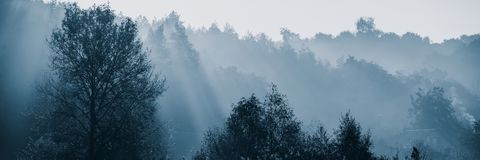Sun rays in the fog on a sunny morning. Web banner stock photo