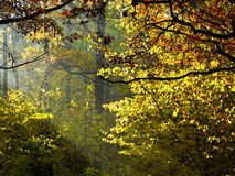 Sun rays through foliage in autumn Stock Image