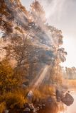 Sun rays through the foliage. autumn forest. Sun rays through the foliage. autumn forest on the shore Stock Image