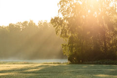 Sun rays through foliage in meadow Stock Photos