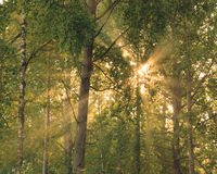 Sun rays through foliage Royalty Free Stock Photography