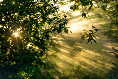 Sun rays foliage stock photography
