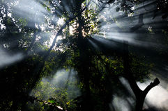 Sun rays in a forest Stock Images