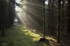 Sun rays in forest Stock Photo