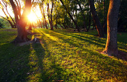 Sun rays in forest Royalty Free Stock Photos