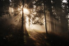 Sun rays in a forest stock image