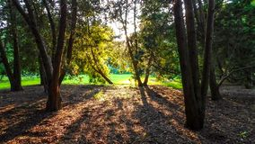 Sun Rays Through Forest. On A Beautiful Day, Morton Arboretum Lisle IL USA stock photography