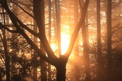 Sun rays in forest Royalty Free Stock Image