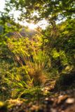 Sun-rays on the forest ground. Forest ground during summer with foliage and moss royalty free stock images