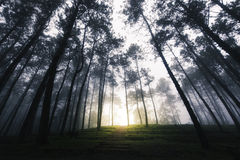 Sun Rays Through Forest Landscape Royalty Free Stock Images