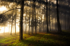 Sun Rays Through Forest Landscape Royalty Free Stock Image