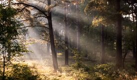 Sun rays in the forest. Morning lights in the rain forest stock photos